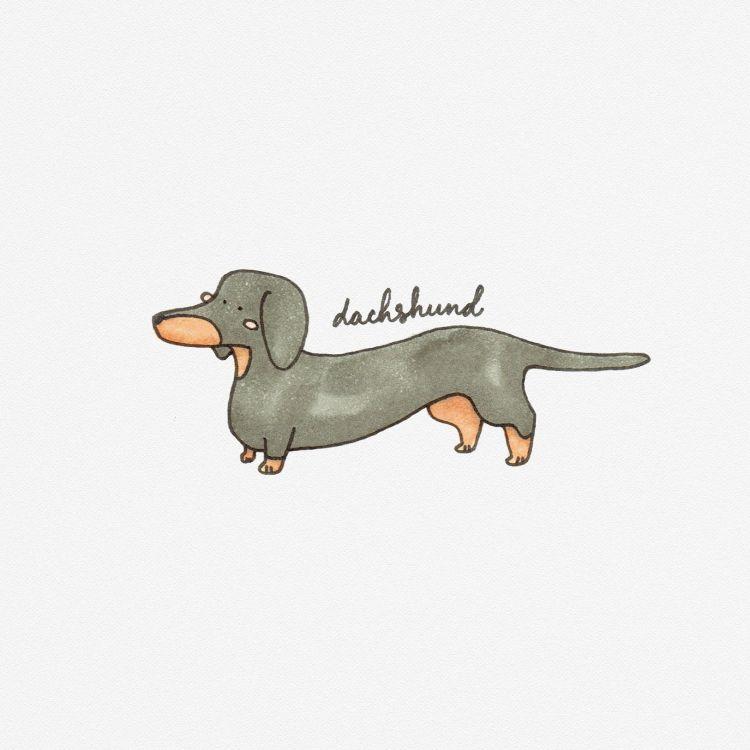 Dachshund, copic marker illustration