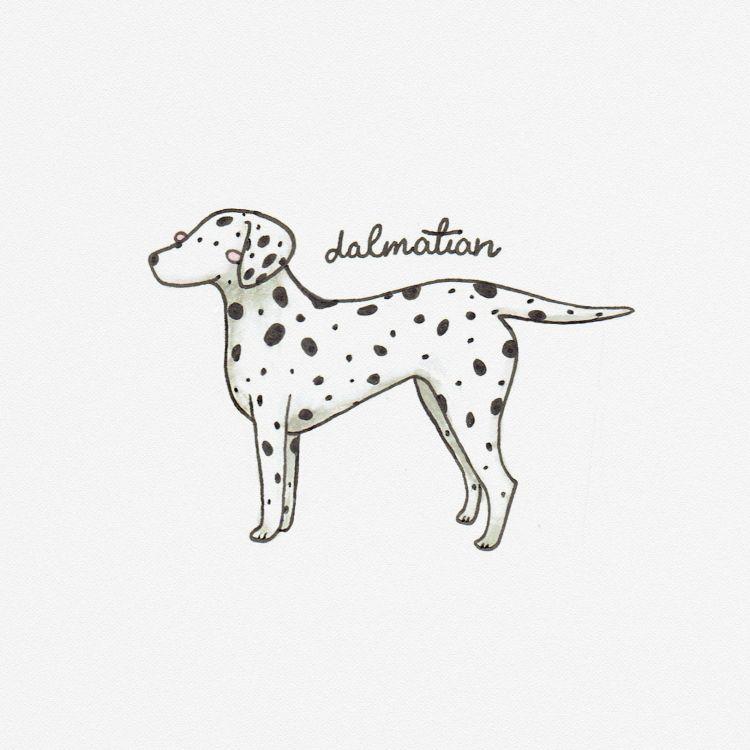 Dalmatian, copic marker illustration