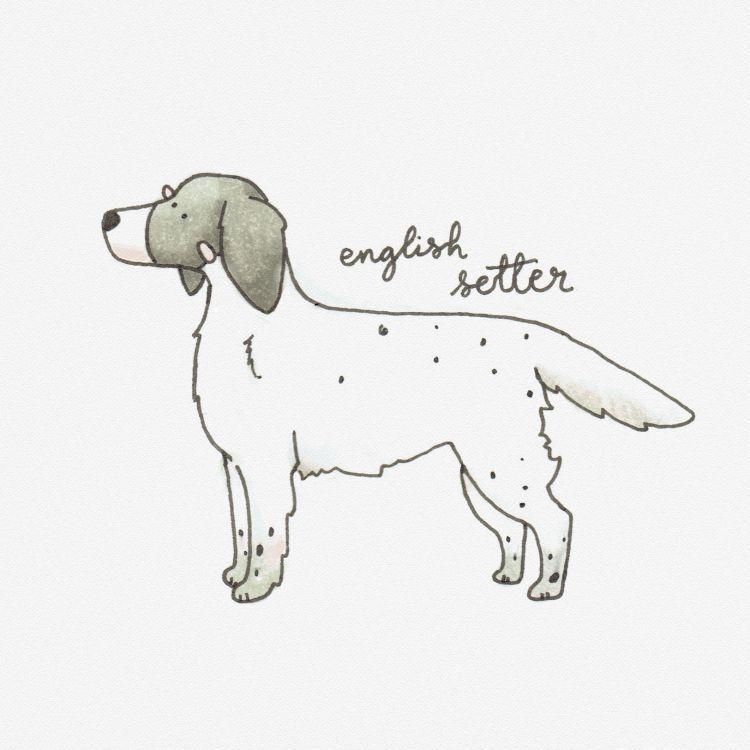 English Setter, copic marker illustration