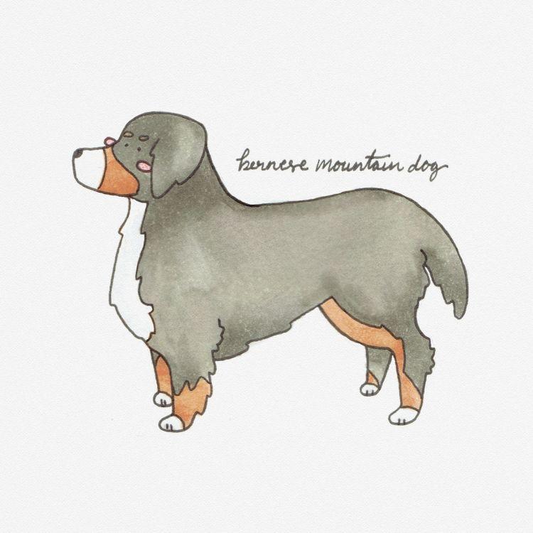 Bernese Mountain Dog, copic marker illustration