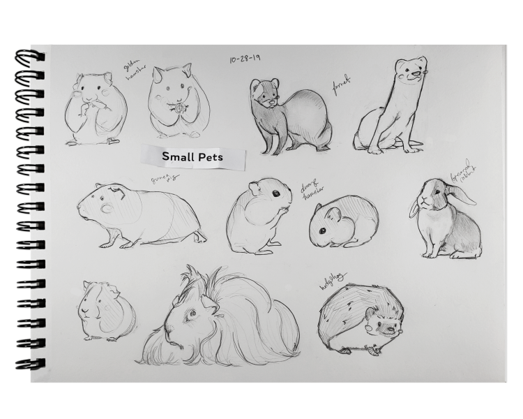 10-28-19 Small Pets Sketches