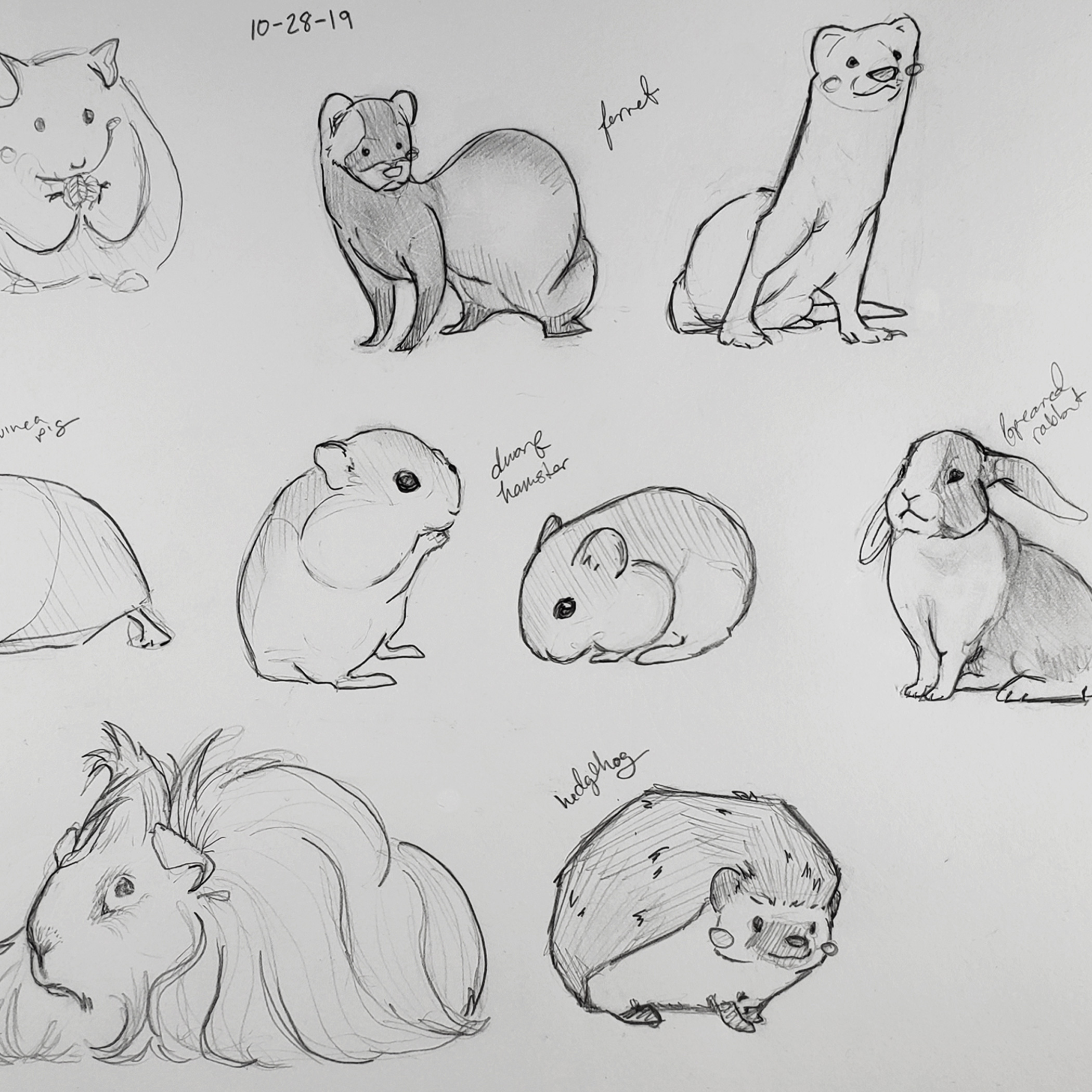 Daily Draw: Small Pets