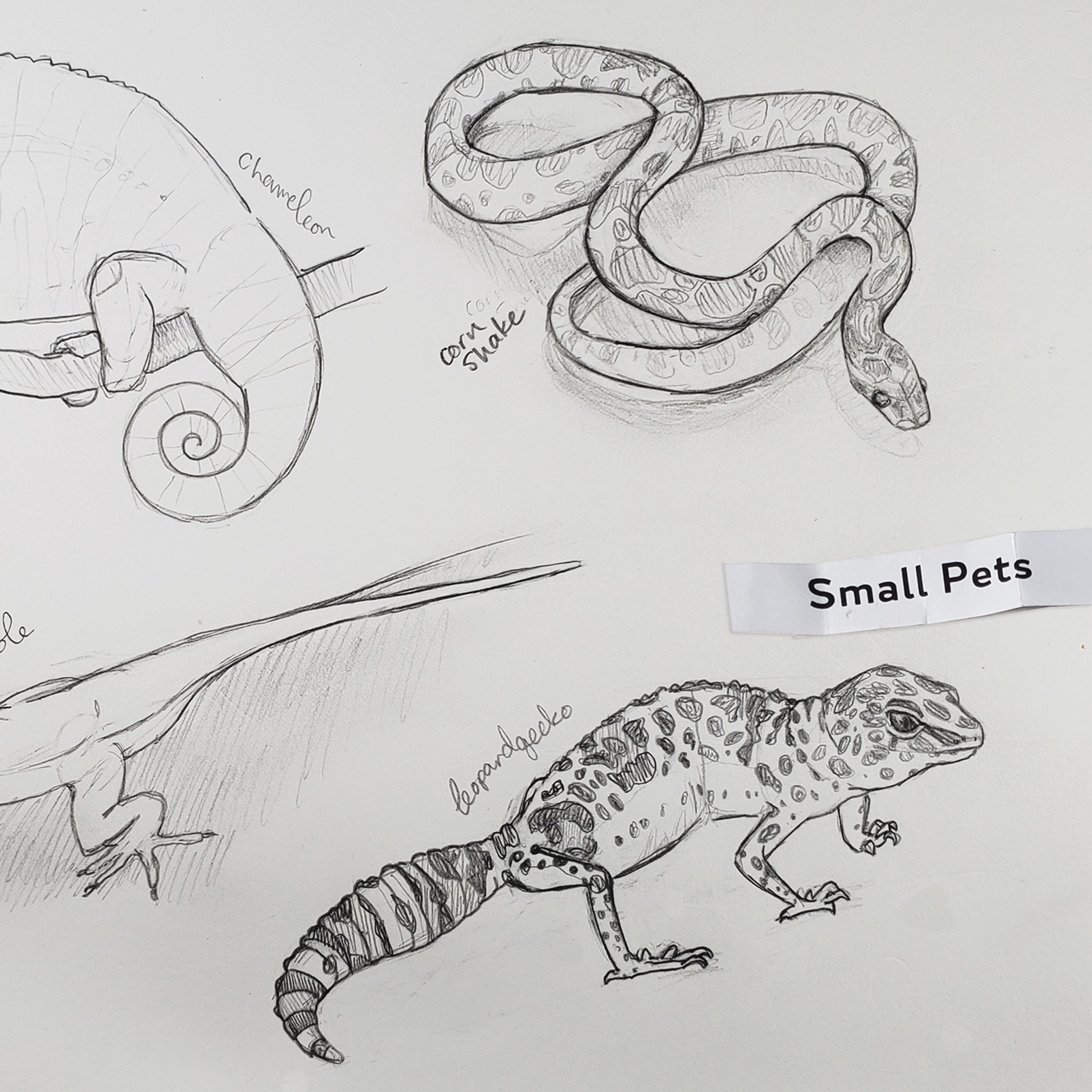 Daily Draw: Small Reptile Pets