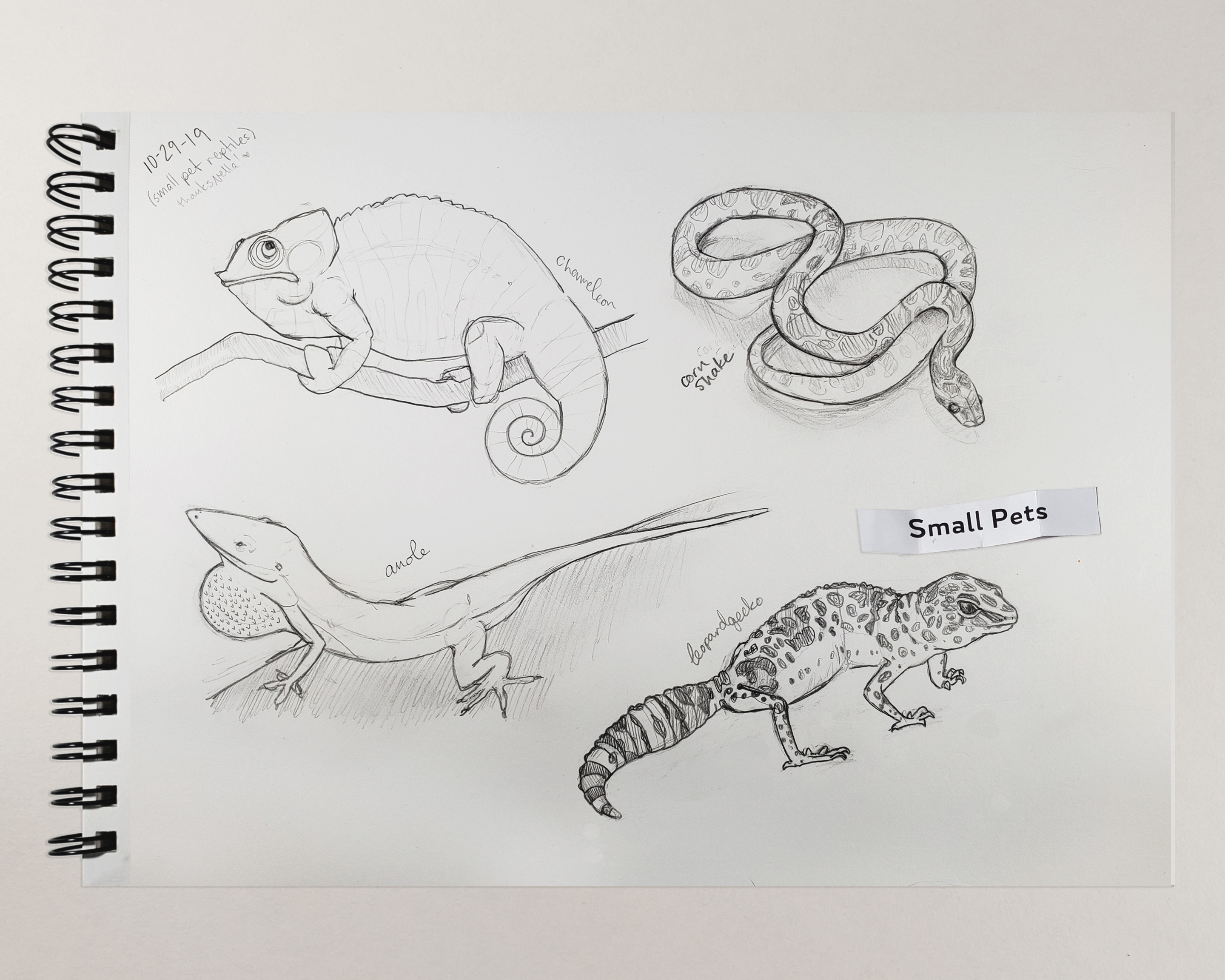 10-29-19 Small Reptile Pets Sketches
